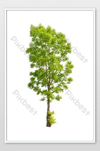 Árbol verde brillante aislado sobre un fondo blanco con trazado de recorte Fotografía Modelo JPG
