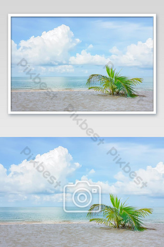 Coconut tree on the beach in summer Background sea and the bright sky. Photo Template JPG