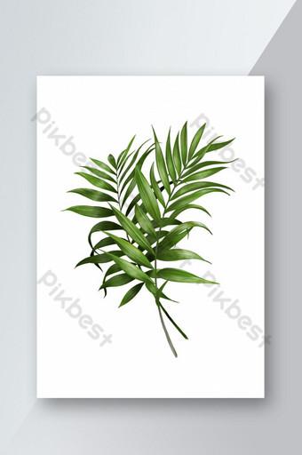 Thực vật màu xanh lá cây vẽ tay minh họa trênền trắng Công cụ đồ họa Bản mẫu PSD