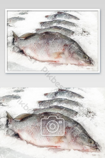 Trevally and snapper fishes on ice in supermarket. Food and health concept Photo Template JPG