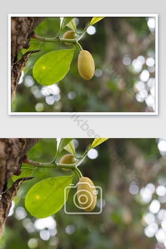 pequeña yaca con hoja al lado de un árbol y foto de fondo bokeh Fotografía Modelo JPG