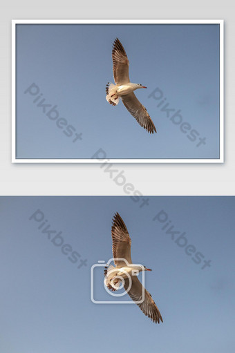 Seagull flying over sea and nature photo Photo Template JPG