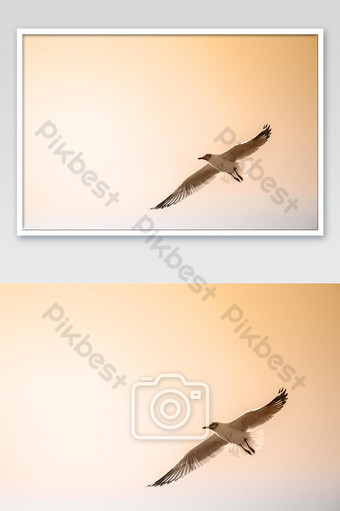 Close up Seagull flying in the air and sky background.Freedom seagull expand wings in sky photo Photo Template JPG