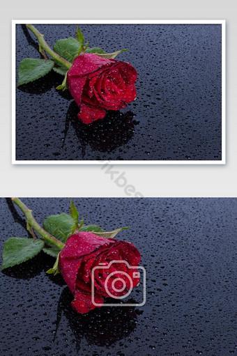 flor rosa roja sobre agua cae reflexión sobre la superficie negra para el festival de san valentín Fotografía Modelo JPG