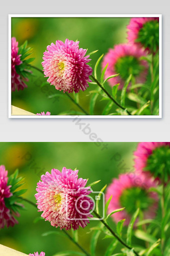 The flower in the tree Photo Template JPG