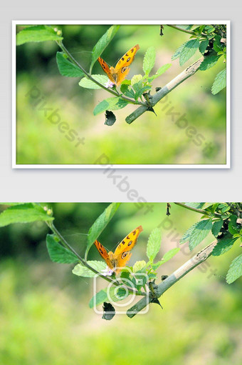 The natural flower Photo Template JPG