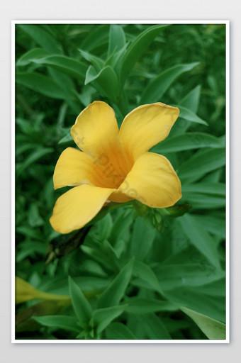 زهرة صفراء الأسهم الصورة التصوير قالب JPG