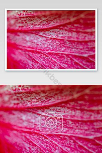 قرب زهرة الكركديه الأحمر التركيز الانتقائي زهرة الكركديه الأحمر الخلفية التصوير قالب JPG