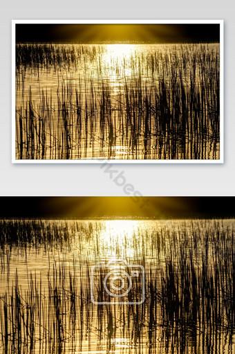 la silueta de la hierba en el agua refleja el sol Fotografía Modelo JPG
