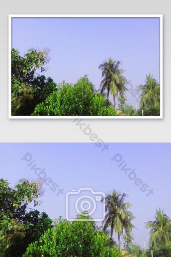 أنا أزرع لطيفًا إلى شجرة صور الهند لطيفة التصوير قالب JPG