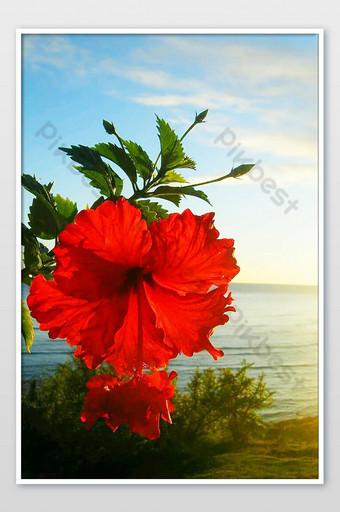 صور زهرة حمراء جميلة جدا التصوير قالب JPG