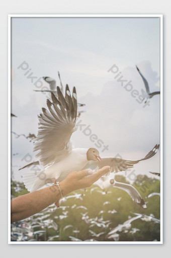 Seagull flying in the air and sky background.Freedom seagull expand wings in the sky. Photo Template JPG