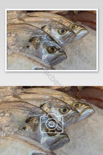 Row fresh Sea Bass fish on ice in market. Photo Template JPG