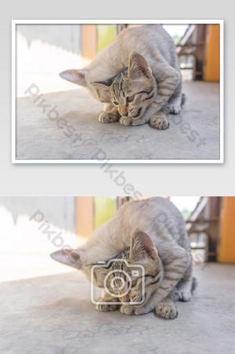 dua anak kucing kecil bermain pola coklat kucing lucu Fotografi Templat JPG