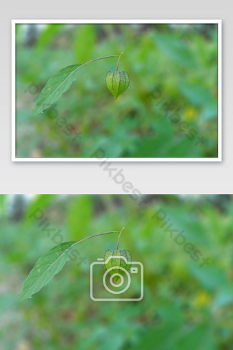 Natural globe plant in this serene Photo Template JPG