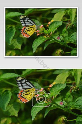 butterfly with natural green Photo Template JPG