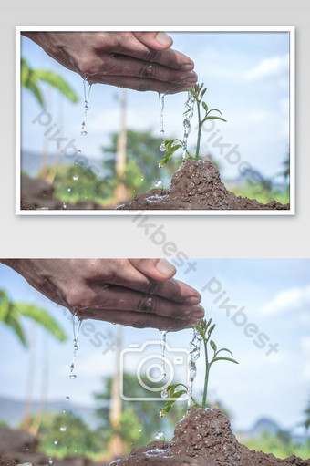 Men hand water young seedling tree on green garden, Earth day seed trees plant concept Photo Template JPG