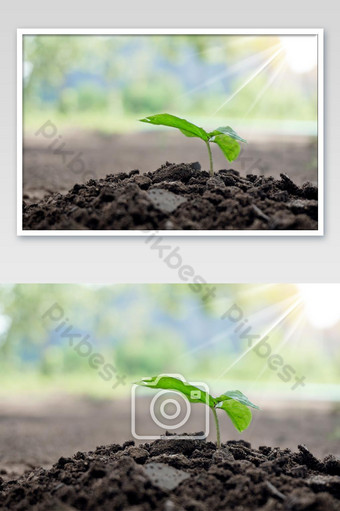 Seedling of plant seeds on a pile of soil Photo Template JPG