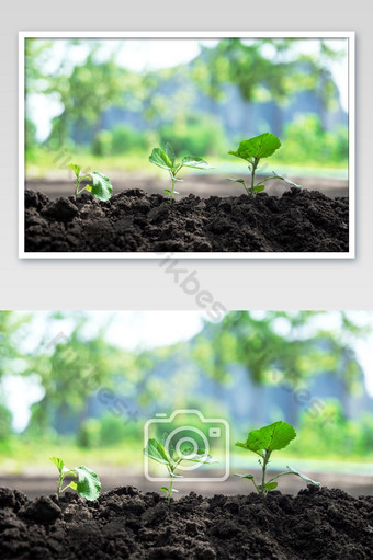 Seedling Three trees of plant seeds on a pile of soilth Photo Template JPG