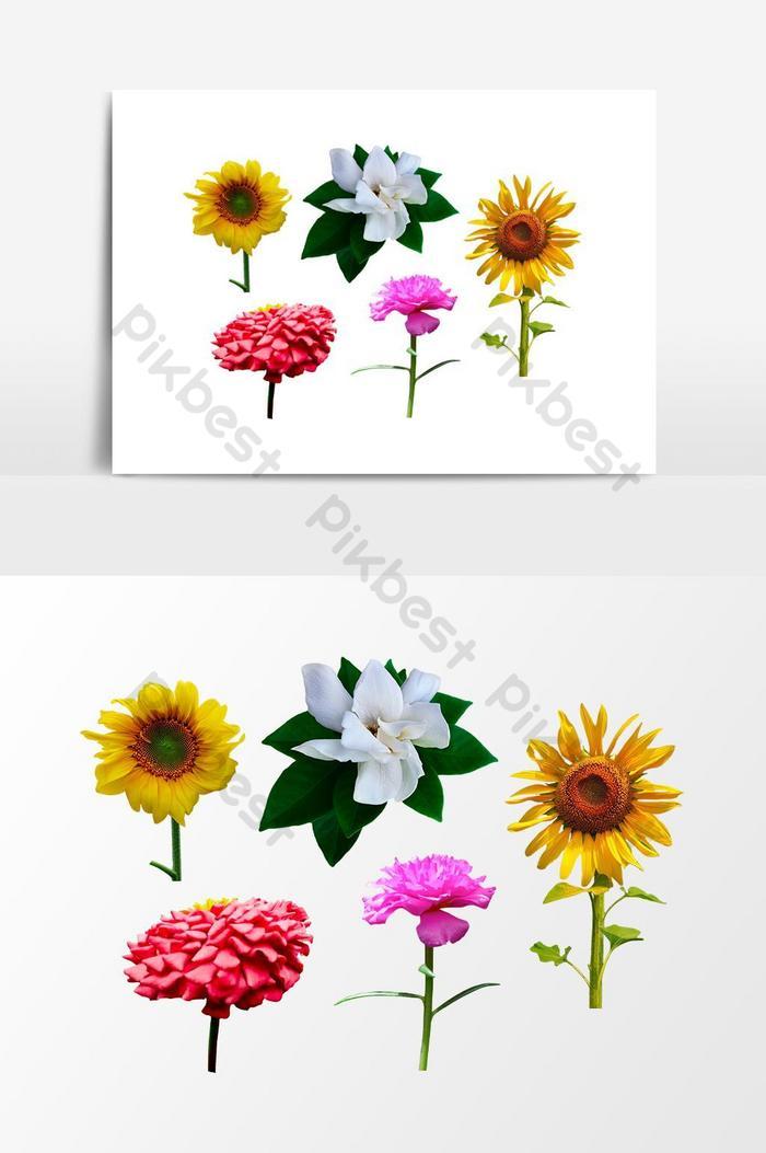 5 bunga transparan gambar png alam gratis