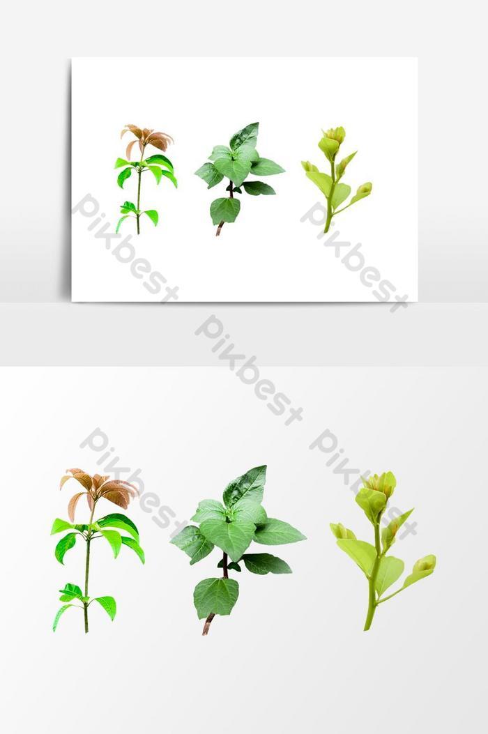 png tanaman hijau alami gambar pohon kecil pada latar belakang transparan