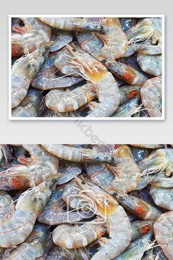 white shrimp background photography Photo Template JPG