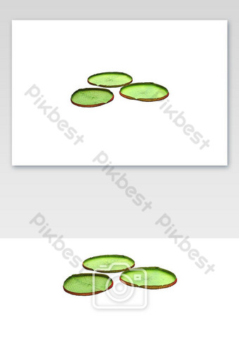 مجموعة أوراق اللوتس الكبيرة، عزل عزل، على أبيض، الخلفية صور PNG قالب PNG