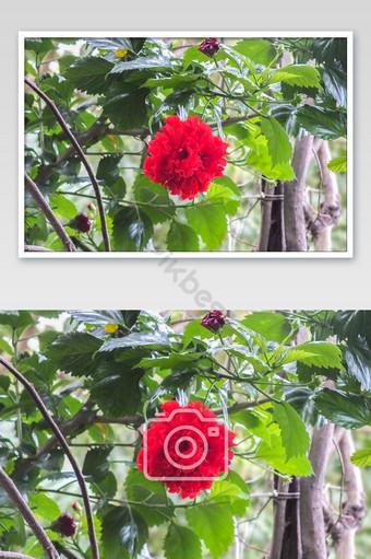 Gros plan d'une belle fleur rouge La photographie Modèle JPG