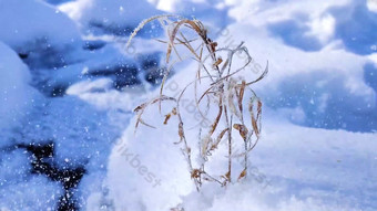 يتم إزالة الثلج الأبيض على النبات بحركة بطيئة عالية الدقة بعيدًا فيديو قالب AEP