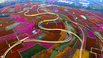 1080p Aerial Photography of Flower Sea in Santaishan Park Video Template AEP