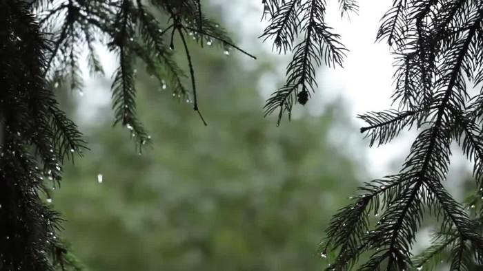 1080p春天下雨的樹木滴下雨天視頻