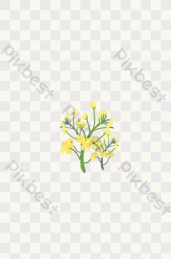 Beautiful Rape Flowers Templates | Free Psd & Png Vector Download - Pikbest