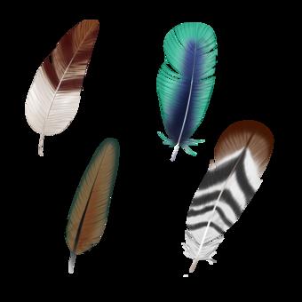 Plumas de pájaros de estilo realista de color Elementos graficos Modelo PSD
