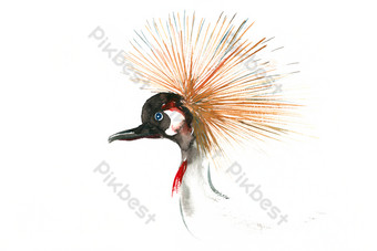 cabeza de pájaro pluma acuarela pintura png gratis Elementos graficos Modelo PSD