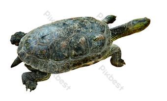 tortuga marina azul Elementos graficos Modelo RAW