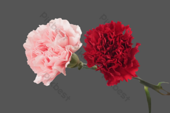 康乃馨花 元素 模板 RAW