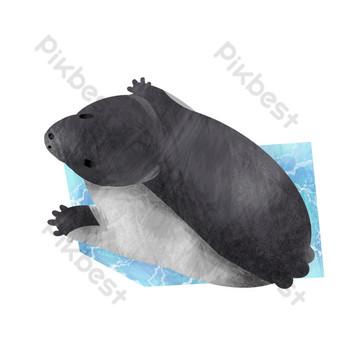 Cute little sea lion PNG Images Template PSD