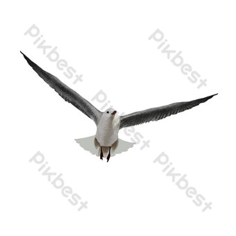 Flying seagull in the sky PNG Images Template PSD