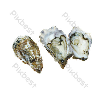 Fresh seafood oysters PNG Images Template RAW
