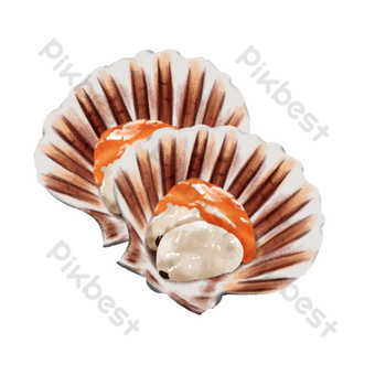 Hand painted colorful seashells PNG Images Template PSD