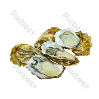 Oyster seafood PNG Images Template RAW