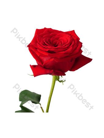 flor rosa roja Elementos graficos Modelo RAW