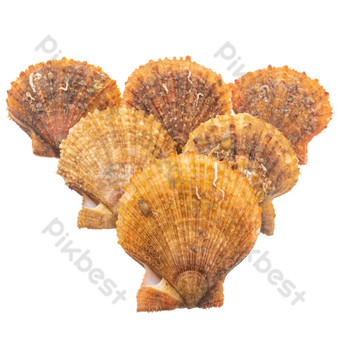Scallop seafood aquatic products PNG Images Template RAW