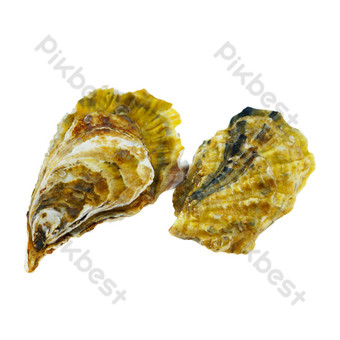 Seafood oysters PNG Images Template RAW