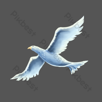 Seagull seagull flying PNG Images Template PSD