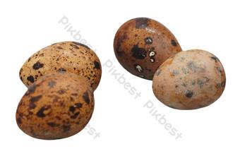 五香蛋 元素 模板 RAW